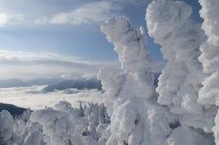 L'inverno funziona le meraviglie Fotografia Stock