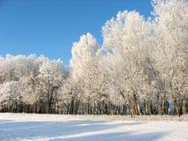 L'inverno ha sua propria bellezza fotografia stock libera da diritti