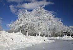 L'inverno, la neve ed il ghiaccio hanno coperto gli alberi, sosta Immagine Stock Libera da Diritti