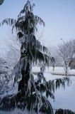 L'inverno non è per gli uccelli Fotografia Stock