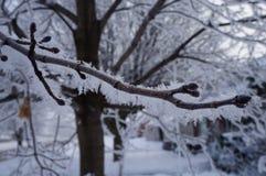 L'inverno non è per gli uccelli fotografia stock libera da diritti