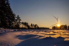 L'inverno sistema il tramonto con neve Fotografie Stock Libere da Diritti