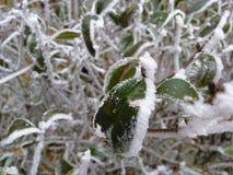 L'inverno sta venendo immagini stock libere da diritti