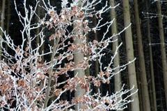 L'inverno sta venendo, il giorno di inverno freddo Fotografia Stock