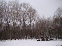 L'inverno viene nella foresta Fotografia Stock