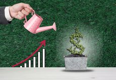 L'investissement de vue supérieure est comme planter des arbres Faites attention qu'elle des RP photo stock