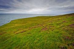 l'Irlande, fleurs sur des falaises images stock