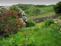 l'Irlande verte Images libres de droits