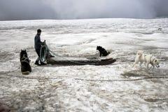 Dogsledding su un ghiacciaio in Islanda Fotografia Stock Libera da Diritti