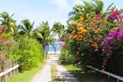 L'isola del Nevis, i Caraibi Fotografia Stock Libera da Diritti