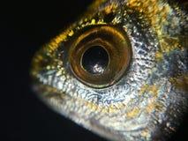 L'isolato dell'unità del fondo del pesce Fotografie Stock Libere da Diritti