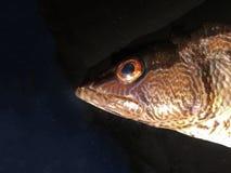 L'isolato dell'unità del fondo del pesce Fotografia Stock Libera da Diritti