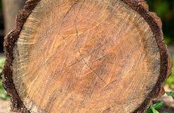 L'isolato di legno del ceppo fotografia stock libera da diritti