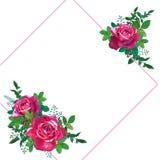 l'isolement vert du fond DOF laisse aux roses rouges le blanc peu profond Photographie stock libre de droits