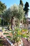 l'israele haifa Giardini di Bahai il tempio di Bahai Il monte Carmelo Fotografie Stock Libere da Diritti