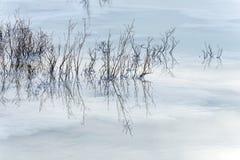 l'israele Mare guasto alba Cristalli di sale Immagine Stock