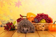 L'istrice grigio divertente si siede sulla tavola di legno, accanto al canestro della frutta e delle verdure immagini stock libere da diritti