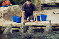L'istruttore sta comunicando con i delfini Fotografia Stock Libera da Diritti