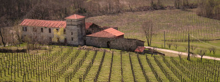 L'Italia. La Liguria. Vigna italiana con la villa fotografie stock