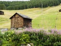 L'Italia, Lombardia, Livigno, paesaggio alpino della montagna nella Florida di estate Fotografie Stock Libere da Diritti