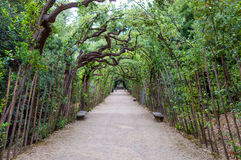 L'Italie, Florence, jardin de Boboli Images libres de droits