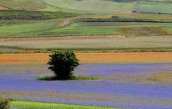 L'Italie - l'Ombrie - le Castelluccio Photos libres de droits