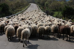 l'Italie Moutons photographie stock