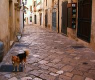 L'Italie, Salento : Rue antique d'Otranto images stock