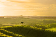 l'Italie tuscany Paysage rural à l'aube photographie stock