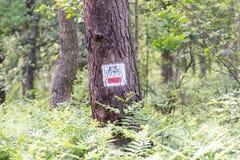 L'itinéraire de bicyclette se connectent l'arbre dans la forêt Photos stock