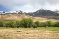 L'itinerario di bello scenico da BiÅ¡kek alla città di Naryn del Kirghizistan fotografie stock