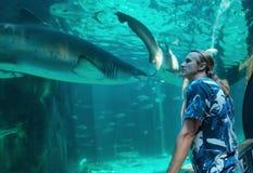 L'jeune homme observe un requin Images libres de droits