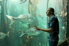 L'jeune homme regarde l'aquarium Photos libres de droits