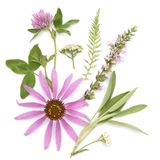l?ka ?rtar Medicinalväxt- och blommabukett av echinaceaen, växt av släktet Trifolium, yarrow, hyssop, vis man fotografering för bildbyråer