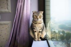 L Katze, die auf einem Fenster sitzt Stockfoto