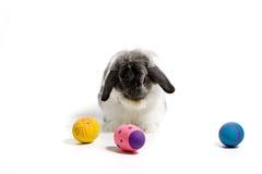 lękliwy królik Easter Fotografia Royalty Free