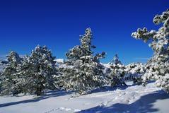 l krajobrazowa zima Obrazy Royalty Free