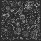 ?l?ments floraux de griffonnage pour la conception Tir? par la main Image de vecteur illustration libre de droits
