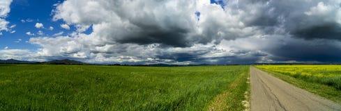 L?ndliche Landschaft Italiens Toskana Grosseto Maremma auf Bl?te, den Rapssamengebieten in bl?henden H?geln und Kiefernwald stockbild