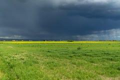 L?ndliche Landschaft Italiens Toskana Grosseto Maremma auf Bl?te, den Rapssamengebieten in bl?henden H?geln und Kiefernwald stockfoto
