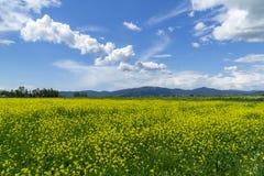 L?ndliche Landschaft Italiens Toskana Grosseto Maremma auf Bl?te, den Rapssamengebieten in bl?henden H?geln und Kiefernwald lizenzfreies stockbild