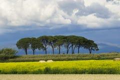 L?ndliche Landschaft Italiens Toskana Grosseto Maremma auf Bl?te, den Rapssamengebieten in bl?henden H?geln und Kiefernwald lizenzfreie stockfotos