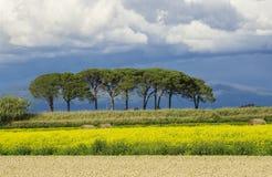 L?ndliche Landschaft Italiens Toskana Grosseto Maremma auf Bl?te, den Rapssamengebieten in bl?henden H?geln und Kiefernwald stockfotografie
