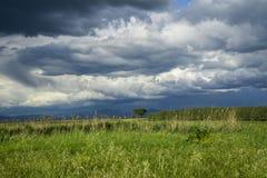 L?ndliche Landschaft Italiens Toskana Grosseto Maremma auf Bl?te, den Rapssamengebieten in bl?henden H?geln und Kiefernwald stockbilder