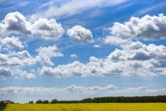 L?ndliche Landschaft, Rapsfeld auf einem Hintergrund des blauen Himmels stockfotos