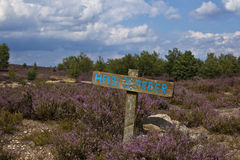 Lüneburger Heide Royalty Free Stock Image