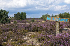 Lüneburger Heide Royalty Free Stock Photo
