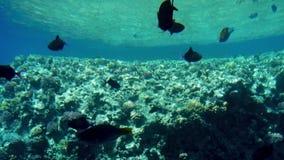 l?ngd i fot r?knat 4k av den h?rliga ccolorful korallreven i R?da havet F?rbluffa undervattens- liv stock video