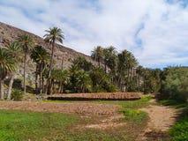 L'oasi Barranca de la Madre di Ajui su Fuerteventura Fotografia Stock