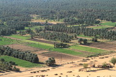 L'oasi Kerma nel Sahara nel Sudan Fotografia Stock